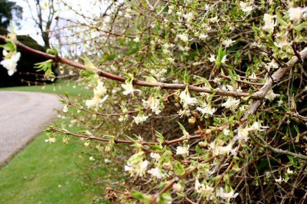 hinton ampner garden near alresford hampshire. Black Bedroom Furniture Sets. Home Design Ideas